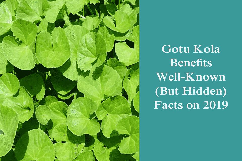 Gotu Kola Benefits